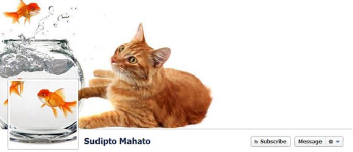 Foto de capa e pefil interagem entre si e retrada cena do cotidiano de quem possui um aquário e gatos em casa (Foto: Reprodução/Catraca Livre)