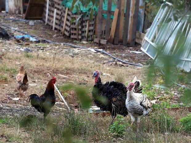 Aves também foram apreendidas (Foto: Valdecir Galor / SMCS)