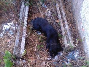 Animal morreu após ingerir carne envenenada (Foto: Miller Mesquita)