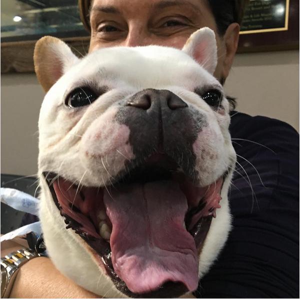 A esposa da escritora Elizabeth Gilbert, Rayya Elias, com seu cachorro (Foto: Instagram)