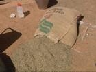 Produtores investem em segurança com aumento de roubos de café