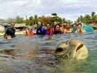 Tartaruga faz aparição surpresa quando grupo tirava foto em ilha