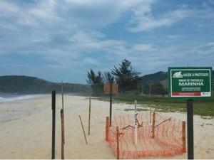 Ninho de tartaruga é protegido em praia de Maricá (Foto: Prefeitura de Maricá)
