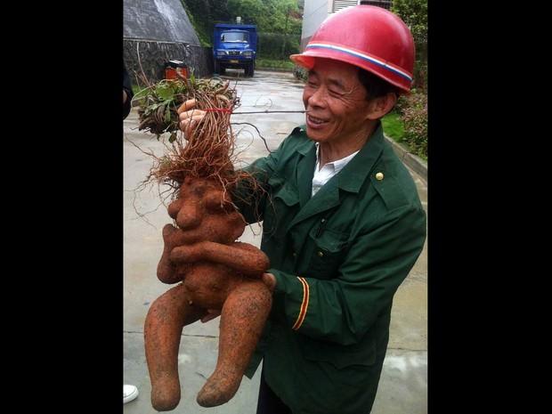 O agricultor chinês identificado como Zhang colheu uma raiz que foi apelidada de Homer Simpson por sua semelhanças com o personagem de desenho animado. Zhang encontrou a raiz na comarca de Dean, em Jiujiang, na província chinesa de Jiangxi. (Foto: ImagineChina)