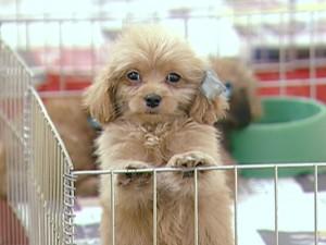 Cachorro em feira de Divinópolis