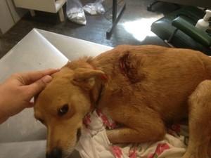 Cachorro ferido por golpes de facão em Aparecida do Taboado (Foto: Divulgação/ PMA)