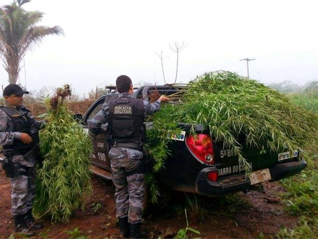 PM encontra plantação de maconha em quintal em Itaipava do Grajaú (Foto: Divulgação/PM)