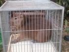 Filhote de capivara é encontrado por guardas florestais em Jundiaí