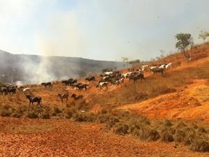Alguns animais que estavam em uma das propriedades tiveram que ser retirados do local. (Foto: Diego Souza/G1)