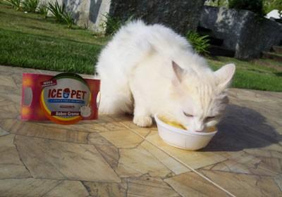 Ice Pet_gato (Foto: divulgação)