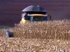 Safra de milho verão na Argentina perderá 570 mil hectares, diz Bolsa