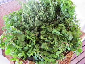 As ervas usadas pela terapeuta são: hortelã, manjericão e alecrim. (Foto: Fabiana De Mutiis/G1)