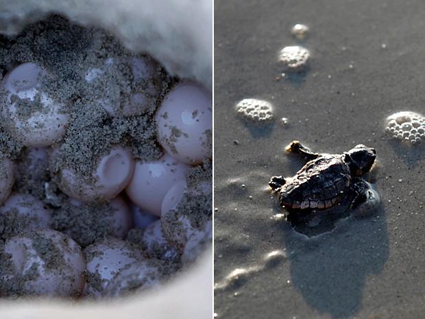 Tartaruga Carolina do Sul 2 (Foto: Randall Hill/Reuters)