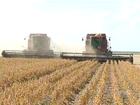 Safra de grãos aumenta 27% no TO; maior crescimento na região norte