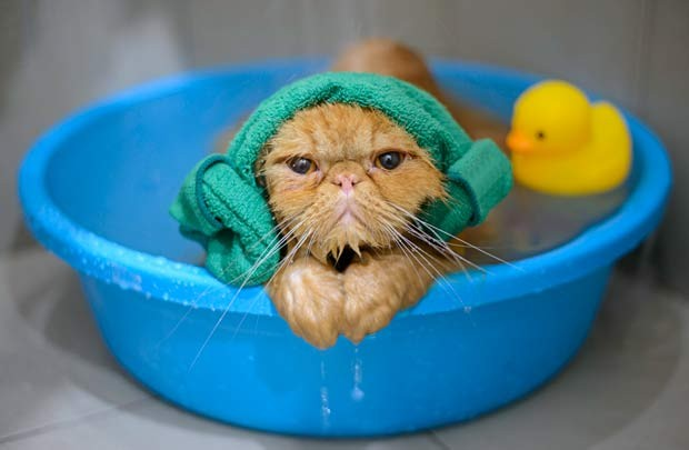 gato-banho (Foto: Thinkstock)