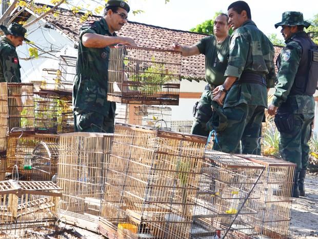 PM Ambiental apreende 53 aves durante ação na Grande João Pessoa, Paraíba (Foto: Walter Paparazzo/G1)