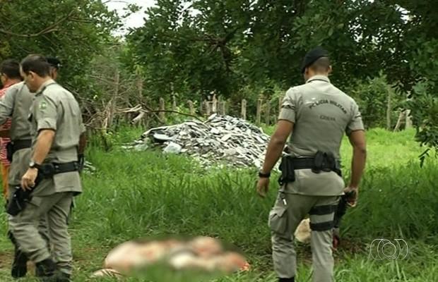 Criminosos invadem fazenda, matam vaca e furtam a carne, em Anápolis, Goiás (Foto: Reprodução/TV Anhanguera)