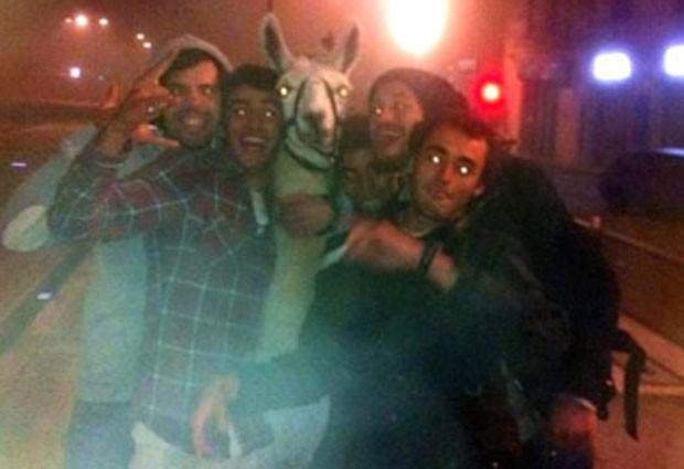 Jovens roubaram lhama de circo e a levaram a passeio com animal em bonde (Foto: Reprodução/Twitter/Xavier CAPPELAERE)