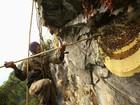 Nepaleses arriscam vida para coletar mel da maior abelha do mundo