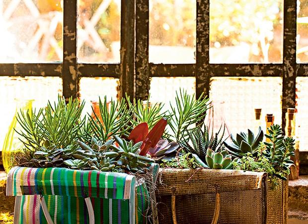 """Sacolas de feira viraram vasos para suculentas nas mãos de Claudia Regina, do ateliê La Calle Florida. """"Plantei as espécies direto. O tecido furadinho é bem drenável"""", explica (Foto: Edu Castello/Casa e Jardim)"""