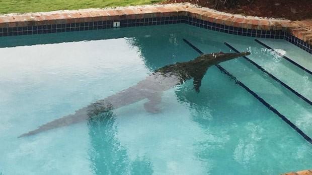 Americano levou susto ao encontrar um crocodilo na piscina de sua casa (Foto: Reprodução/Twitter/Monroe County Sheriff's Office )