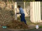 Dez mil focos de mosquito são achados em um mês pela Celpe