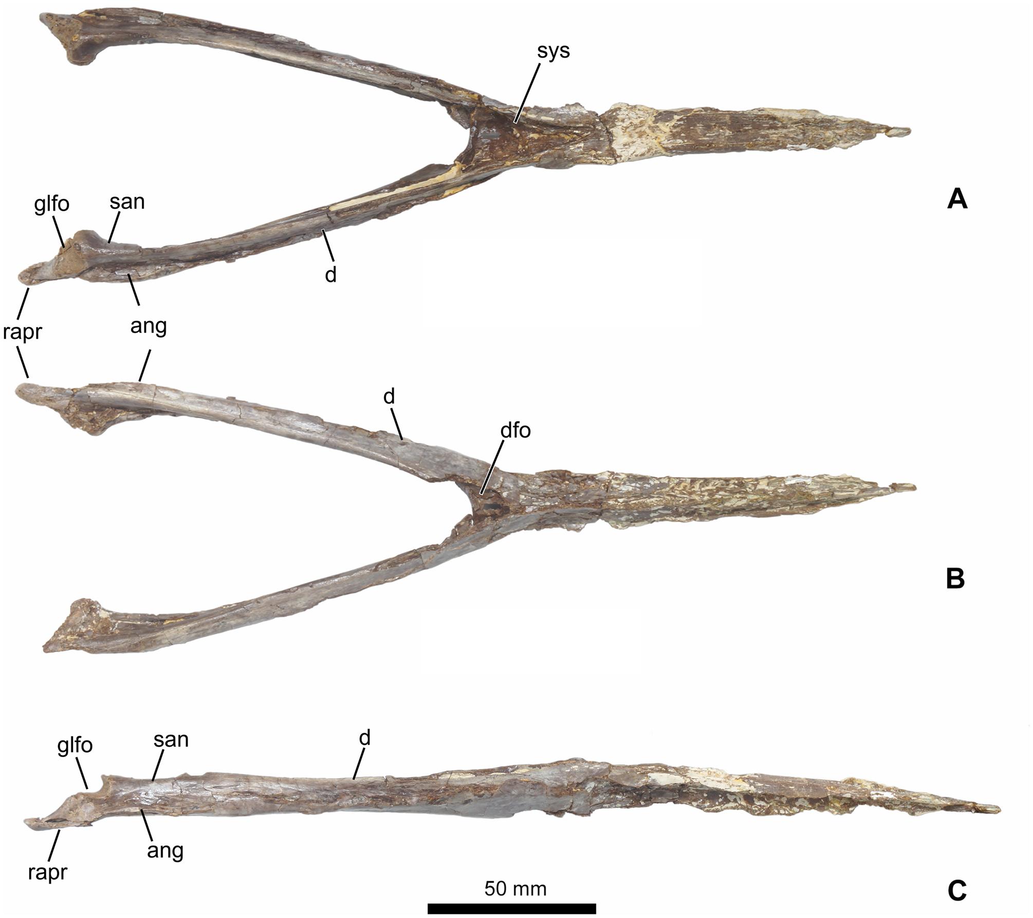 Nova espécie de pterossauro é descoberta no Ceará