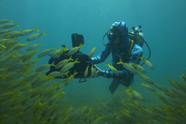 Lawrence Wahba mergulhando com cardume  (Foto: Divulgação/Marcelo Skaf)