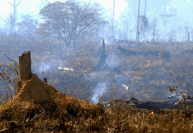 Pesquisadores do Inpe desenvolvem algoritmo regional para detectar mensalmente áreas de vegetação afetadas pelo fogo no país com base em dados de sensor embarcado em satélites da Nasa  (Foto: Valter Campanato/Agência Brasil)