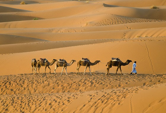 O dromedário é um ícone do Saara; Erg Chebbi, Marrocos (Foto: © Haroldo Castro/ÉPOCA)