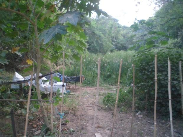 Recicladores fizeram uma cerca de madeira para isolar a área verde (Foto: Internauta/VC no G1)