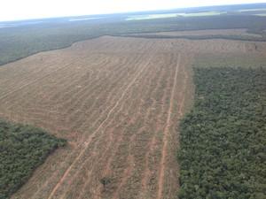 No total, foram desmatados 1,4 mil hectares (Foto: Da assessoria/Ibama-MT)