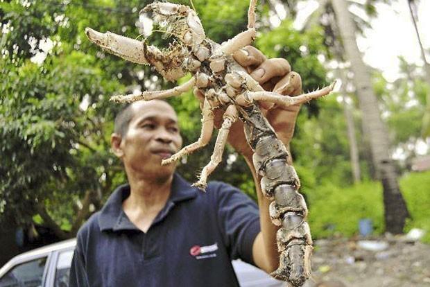 Ismail Jusoh encontrou criatura estranha que lembra outros 3 animais (Foto: Reprodução/Facebook/Bombastic Borneo)