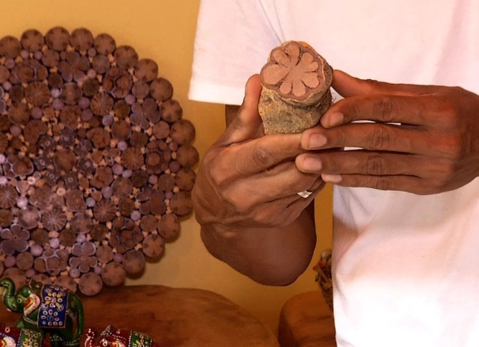 Conheça um dos cipós que estão nas peças do artesão (Foto: Reprodução/ Rio Sul Revista)