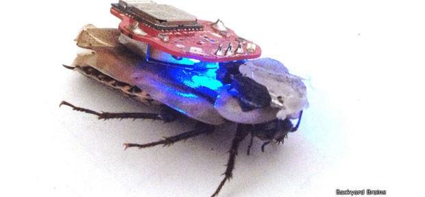 Criadores do projeto afirmam que ele não provoca dores no inseto (Foto: BBC)