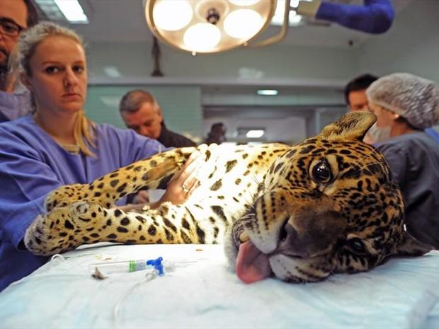 Angelina passou por procedimento cirúrgico nesta quinta-feira (18) (Foto: Everson Bressan/SMCS)