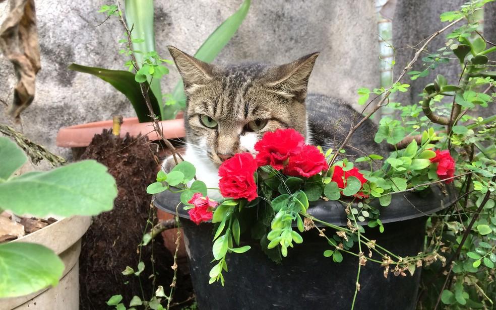 Gato descansa dentro de vaso de flores (Foto: Paulo Toledo Piza/G1)