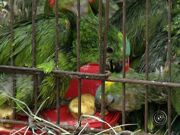 Animais foram resgatados e levados para ONG (Foto: Reprodução/TV TEM)