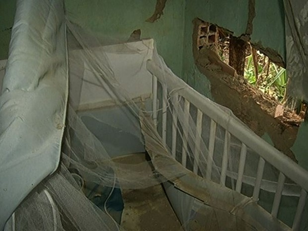 Palmeira caiu ao lado do berço onde bebê dormia. (Foto: Reprodução/TV Anhanguera)
