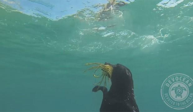 Alex Schulze ensinou sua cadela a mergulhar e capturar lagostas (Foto: Reprodução/YouTube/Devoted to the Ocean)