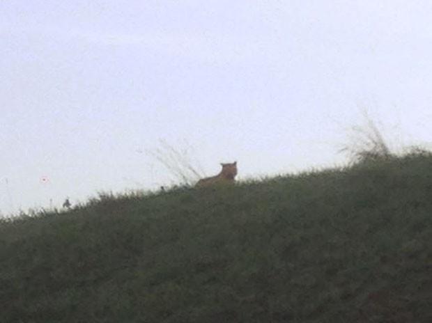 Tigre solto foi visto durante a manhã pela esposa do gerente de um supermercado de Montévrain, ao leste de Paris, que tirou uma foto e deu o alerta' (Foto: Reprodução/Facebook/Ville de Montevrain)