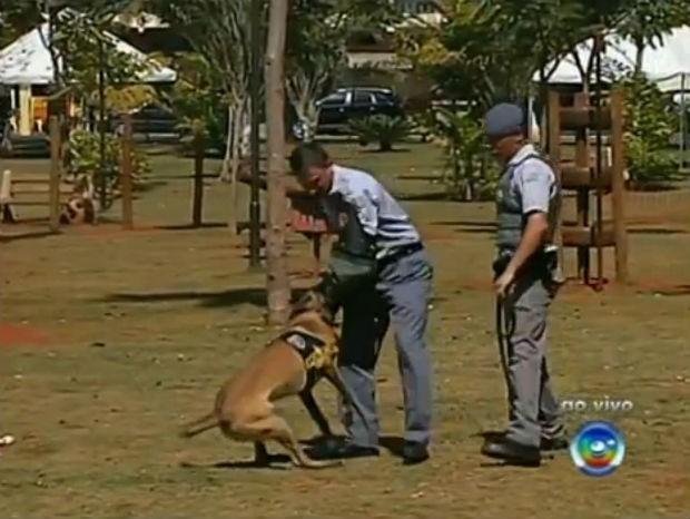 Estimacão em Tatuí (Foto: Reprodução/TV TEM)