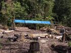 Serraria ilegal em área florestal é desmanchada em Barcarena, no Pará