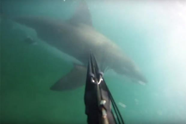 Tubarão ataca mergulhador na Califórnia (Foto: Reprodução/Youtube)