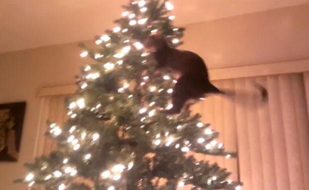 Gato subiu no topo e acabou derrubando árvore de Natal (Foto: Reprodução/Live Leak/MickeyBoy)