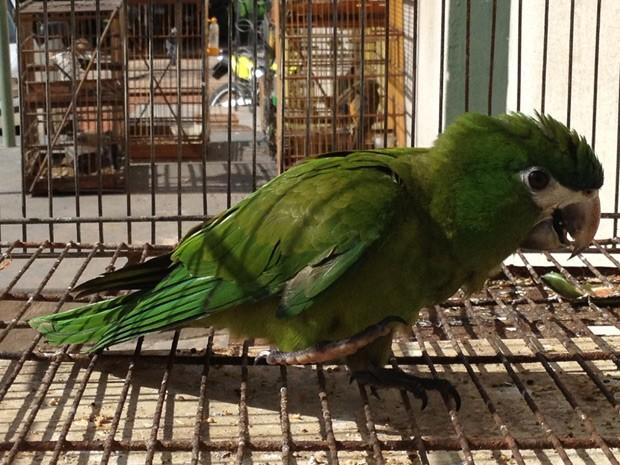 Entre as aves apreendidas, está um maracanã que, segundo a PM Ambiental, está em risco de extinção (Foto: Walter Paparazzo/G1)