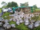 Caminhão tomba e botijões de gás ficam espalhados em pista na Bahia