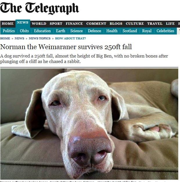 O cão Norman (Foto: Reprodução)