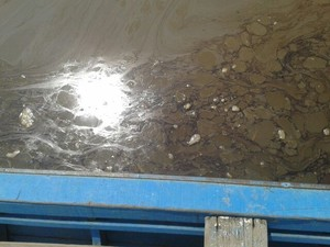 derramamento de óleo  (Foto: Divulgação/Comunidade de Pescadores Z-20)
