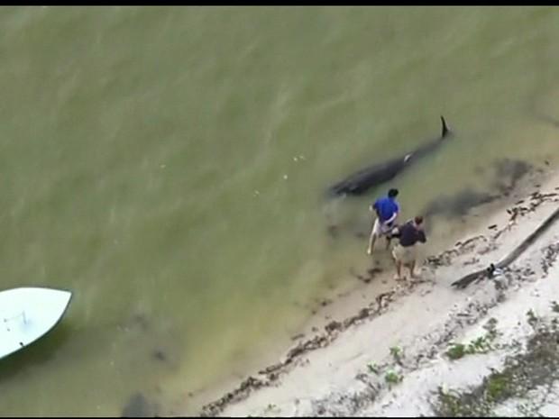 Baleias morrem encalhadas em uma praia da Flórida (Foto: Reprodução GloboNews)